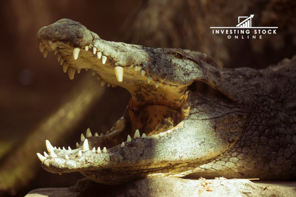 being disciplined like a crocodile